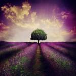 a_silent_dream_by_lilyenn-d6qbjo8_by_jlilyenn600_600