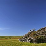 The Beautiful Windswept Trees of Slope Point