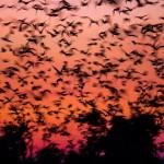 Bats-02