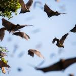 Bats-05