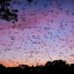Bats-09