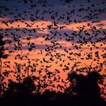 Bats-10