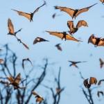 Bats-13