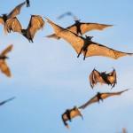 Bats-16
