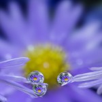Miki Asai-Three graces