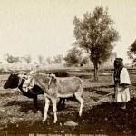 Peasant ploughing