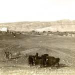 Vue generale de Jericho prise de la plaine